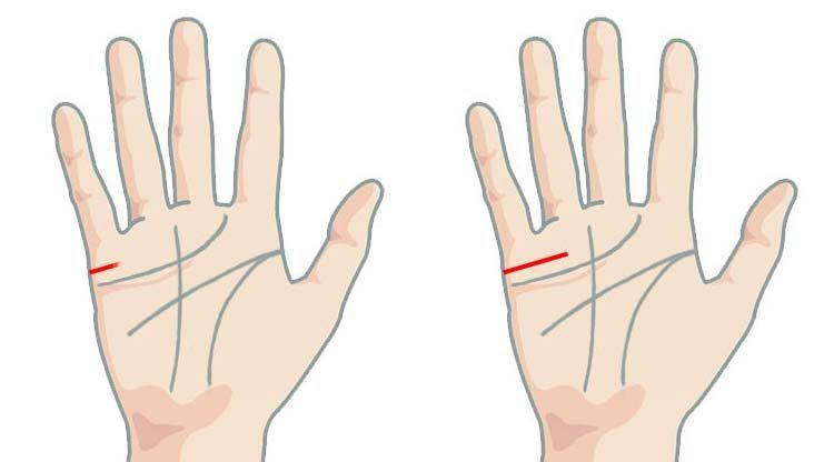 Marriage line length on palm