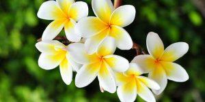 Feng Shui Flowers