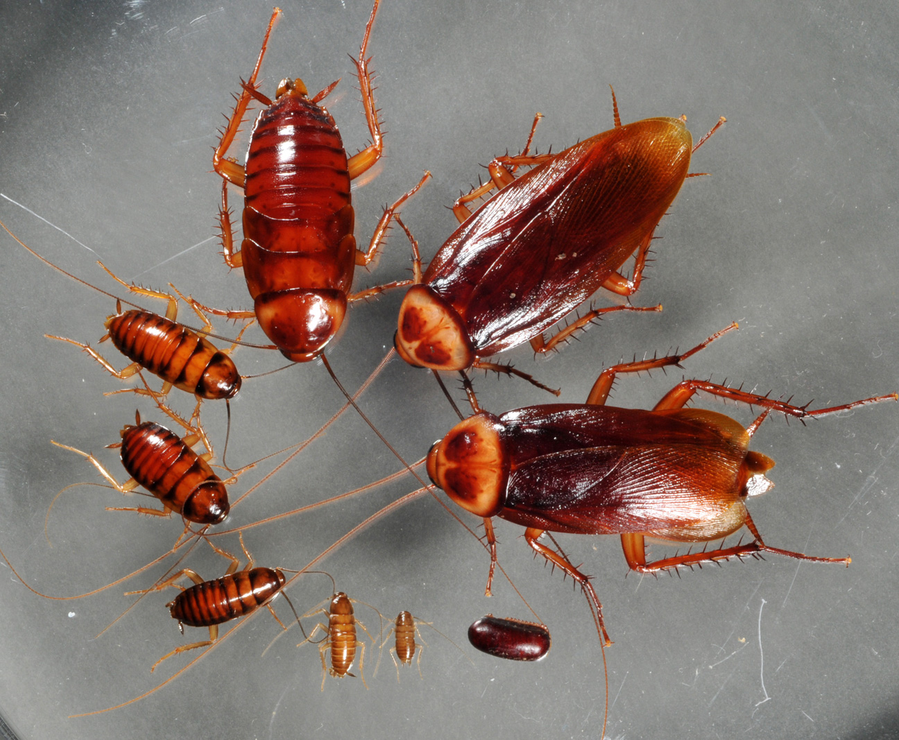 what-does-it-mean-to-dream-about-cockroaches