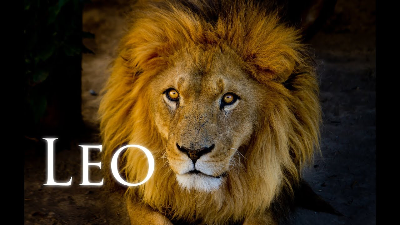 solar-eclipse-in-leo-the-transformation-your-mood-needs