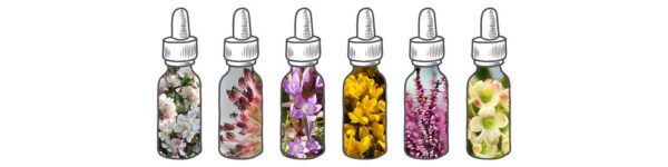 Bach flowers remedies and essences