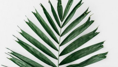 plants-that-ward-off-evil-spirits