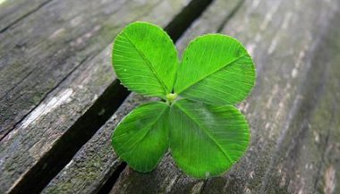 the-search-for-the-four-leaf-clover