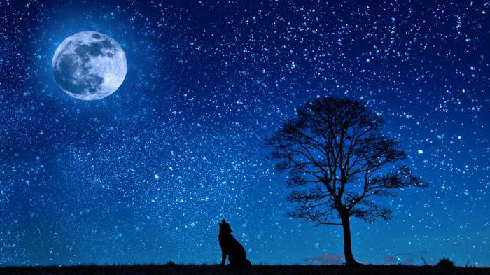 meaning-of-dreaming-about-stars