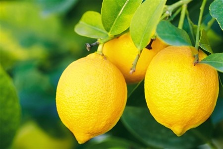 meaning-of-dreaming-about-lemons
