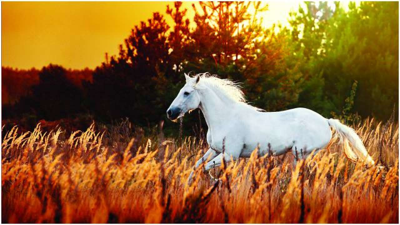 meaning-of-dreaming-about-horses