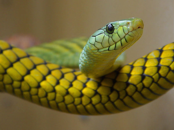 meaning-of-dreaming-about-snakes