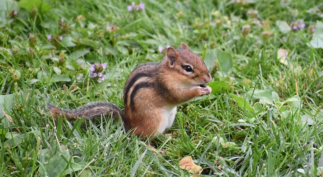 dream-meaning-of-squirrels