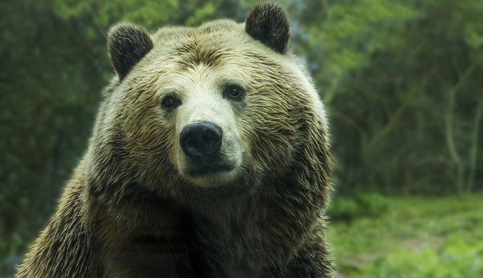 meaning-of-dreaming-about-bears
