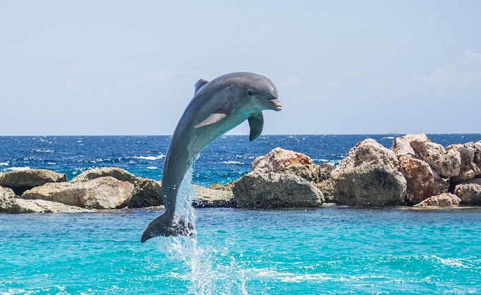 meaning-of-dreaming-about-dolphins