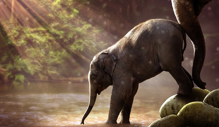 meaning-of-dreaming-about-elephants