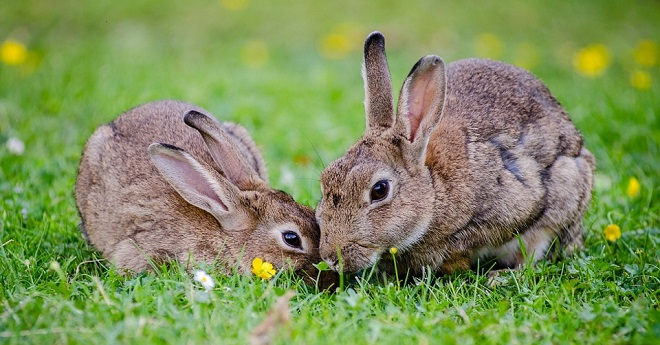 what-does-it-mean-to-dream-of-rabbits