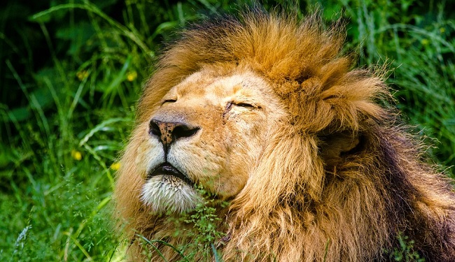 what-does-it-mean-to-dream-of-lions