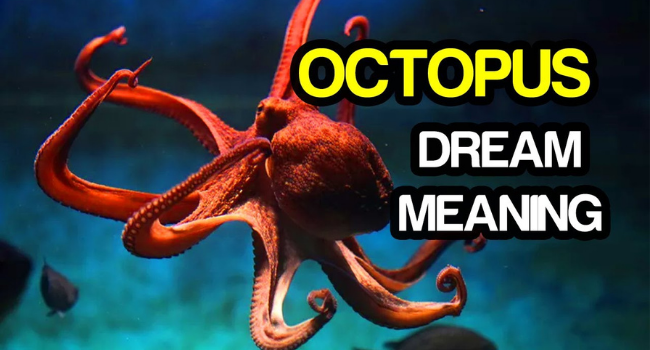 what-does-it-mean-to-dream-of-octopuses