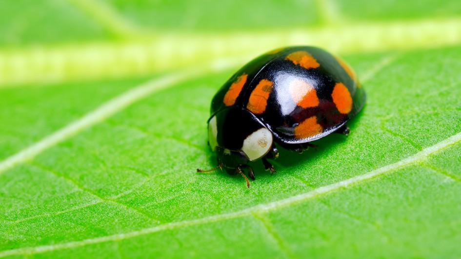 meaning-of-dreaming-about-bugs