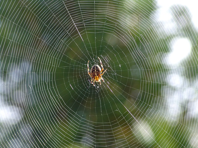 meaning-of-dreaming-about-cobwebs