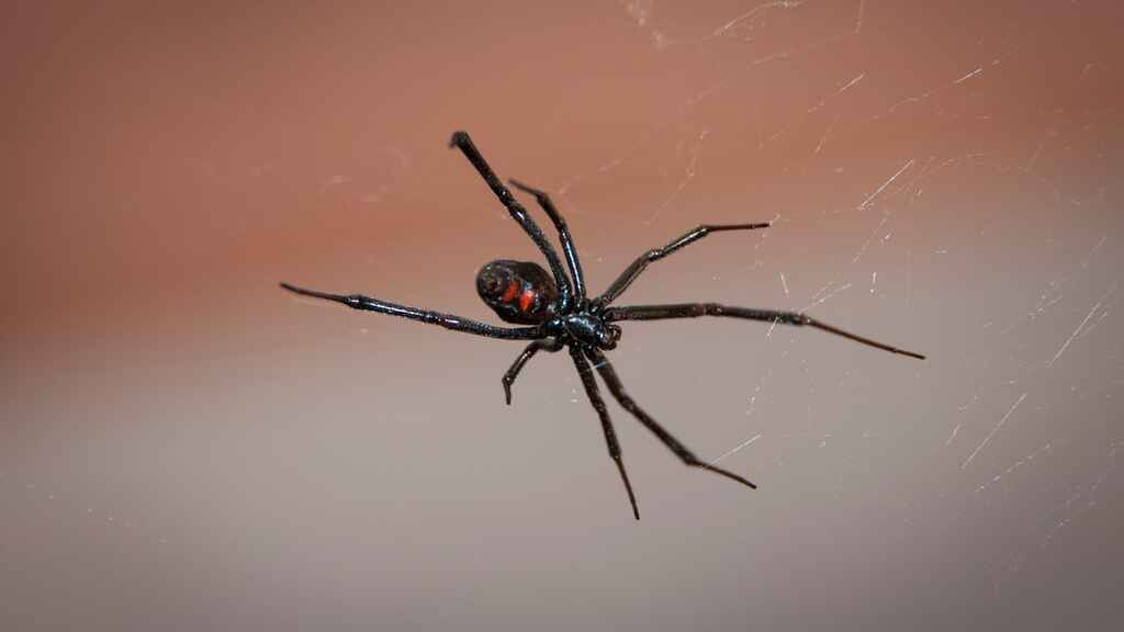 dream-about-spider-dream-meaning-and-interpretation