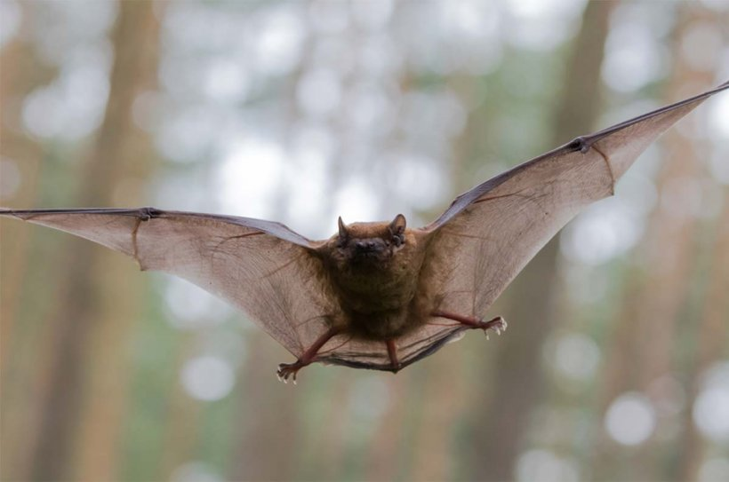 what-does-it-mean-to-dream-about-bats