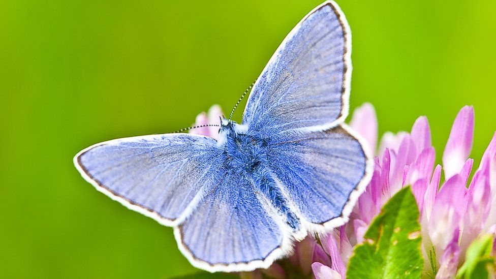 what-does-it-mean-to-dream-about-butterflies