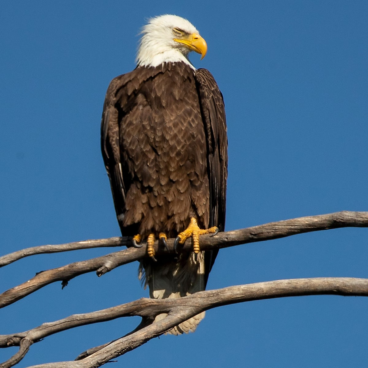 what-does-it-mean-when-you-see-eagles-in-your-dreams