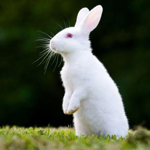 rabbit-symbolism-meaning