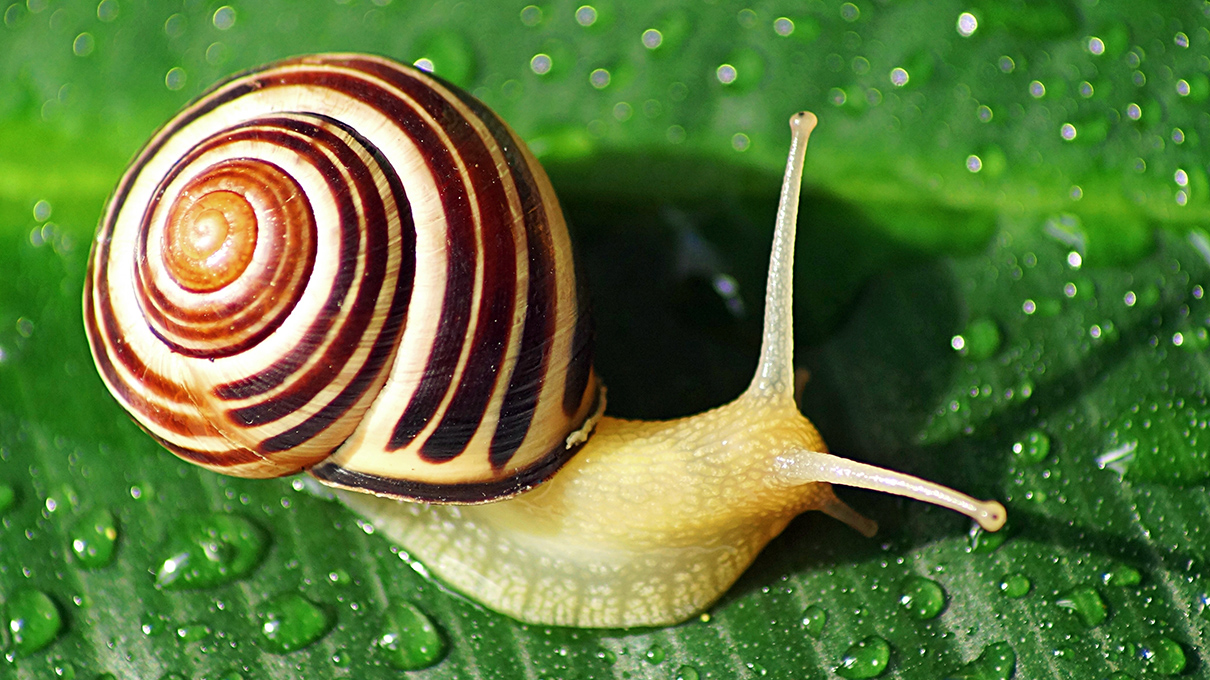 snails-symbolism-and-meaning