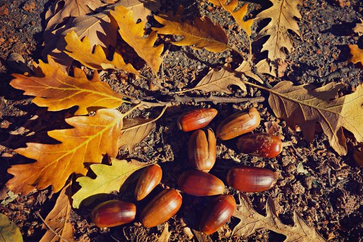 what-does-it-mean-to-dream-about-acorns