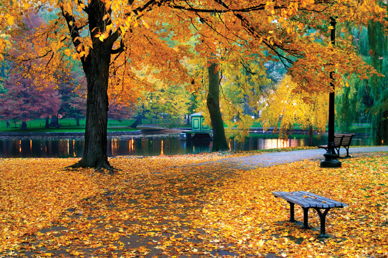 what-does-it-mean-to-dream-about-autumn-and-fall