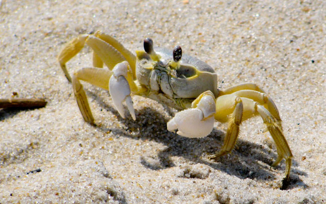 what-does-it-mean-to-dream-about-crabs