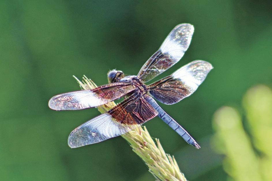 what-does-it-mean-to-dream-about-dragonfly
