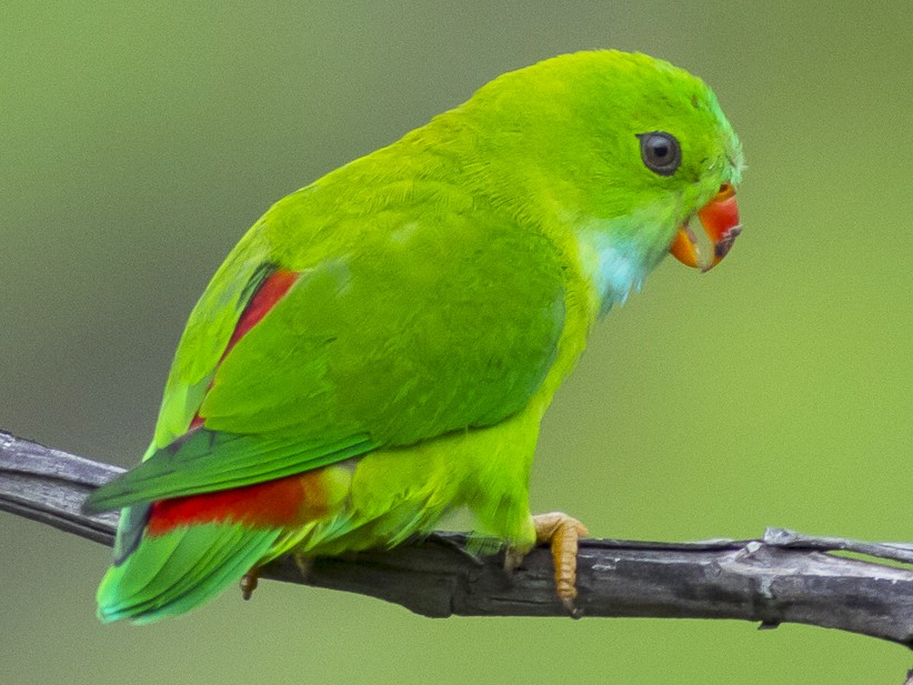 what-does-it-mean-to-dream-about-parrot