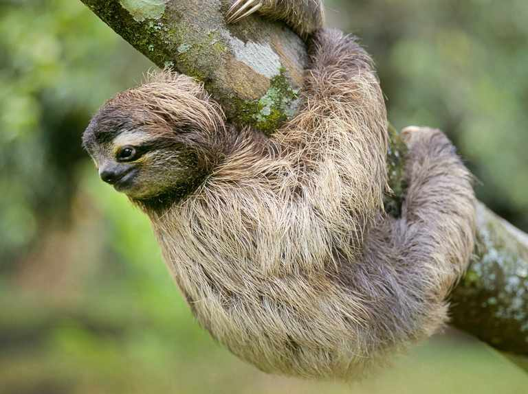 what-does-it-mean-to-dream-about-sloth