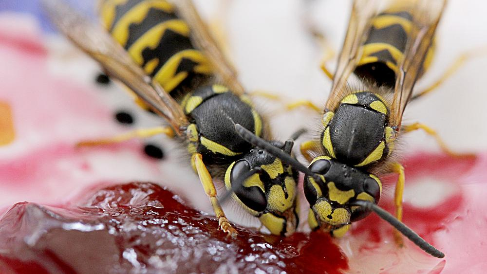 what-does-it-mean-to-dream-about-wasp